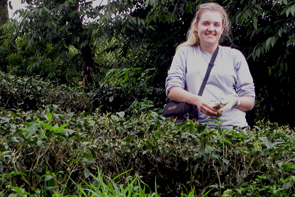 Kaitlin Ramspeck at the National Taiwan University tea plantation.