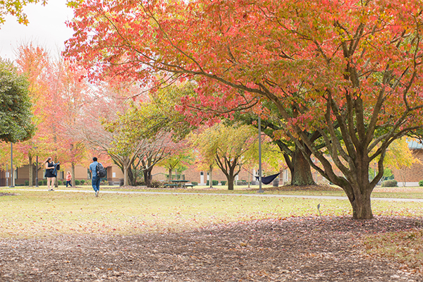 Arbor Day Foundation awards university with Tree Campus recognition