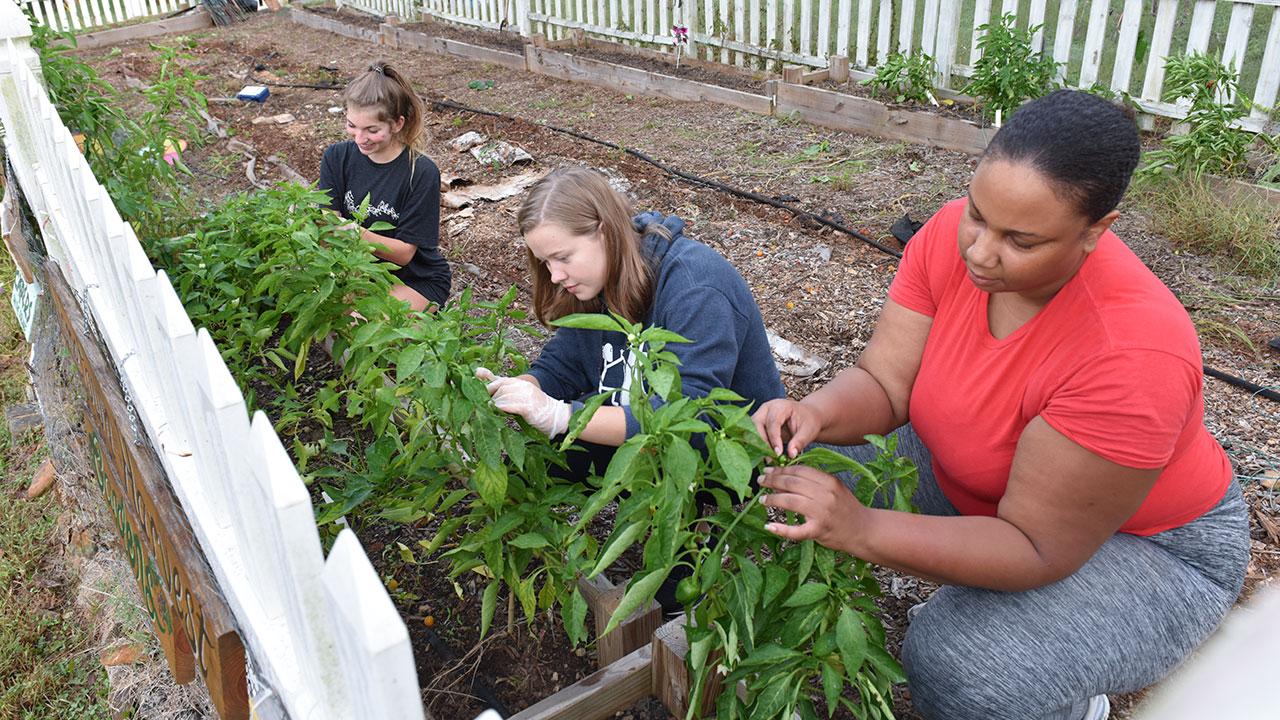 Hometown Harvest gets grant for outdoor classroom